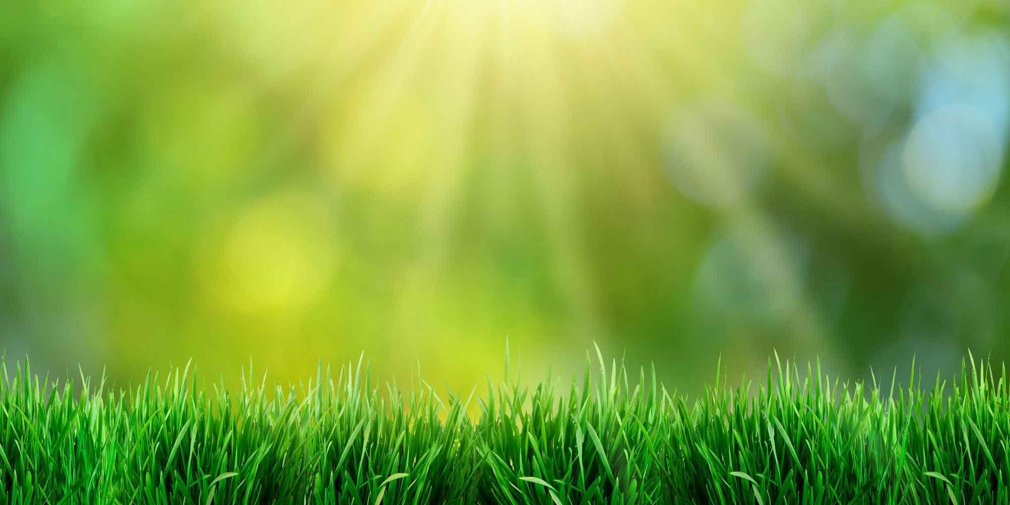 green leaves scenery - HD Desktop Wallpapers | 4k HD